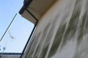 外壁のカビ・苔・藻が生えた画像